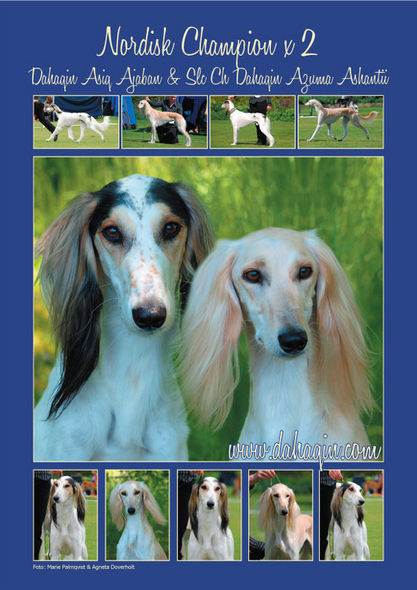 Swedish Saluki Club Autumn Issue 2009/2-3