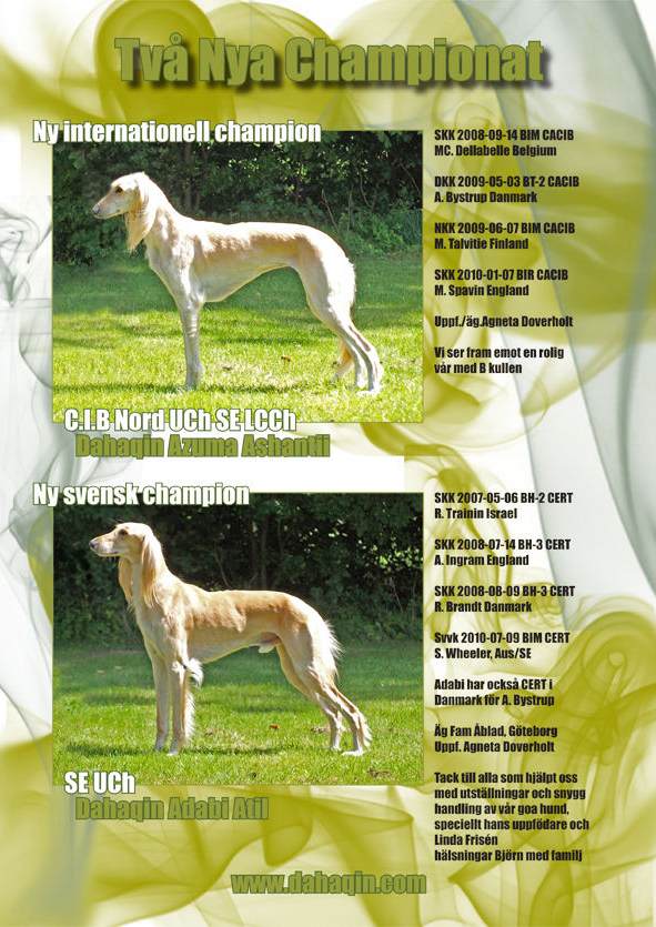 Swedish Saluki Club Spring Issue 2010/1