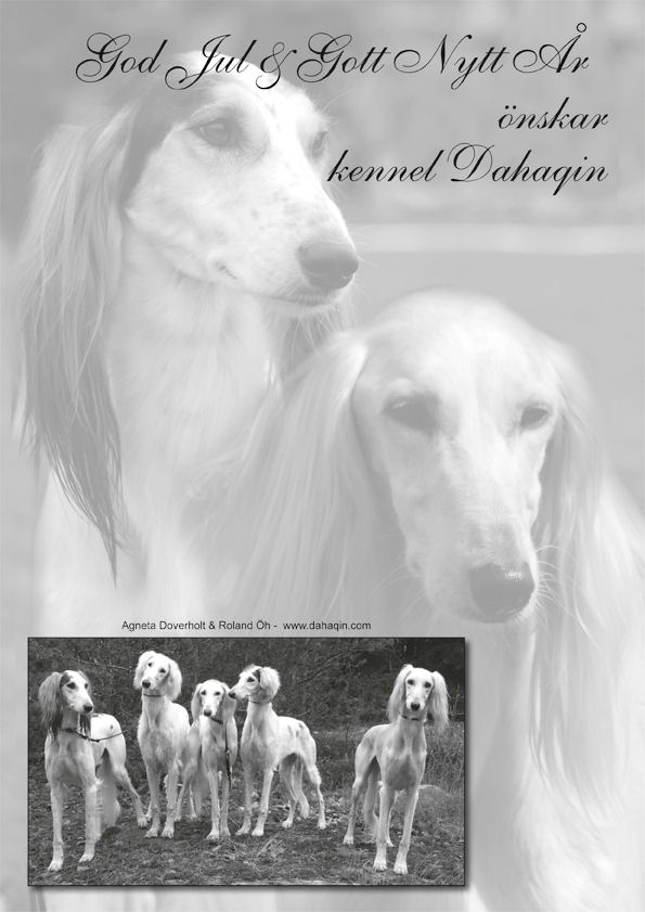 Swedish Saluki Club Christmas Issue 2010/4