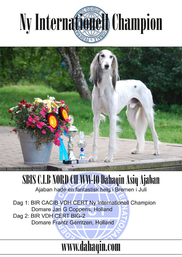 Swedish Saluki Club Autumn Issue 2011/3