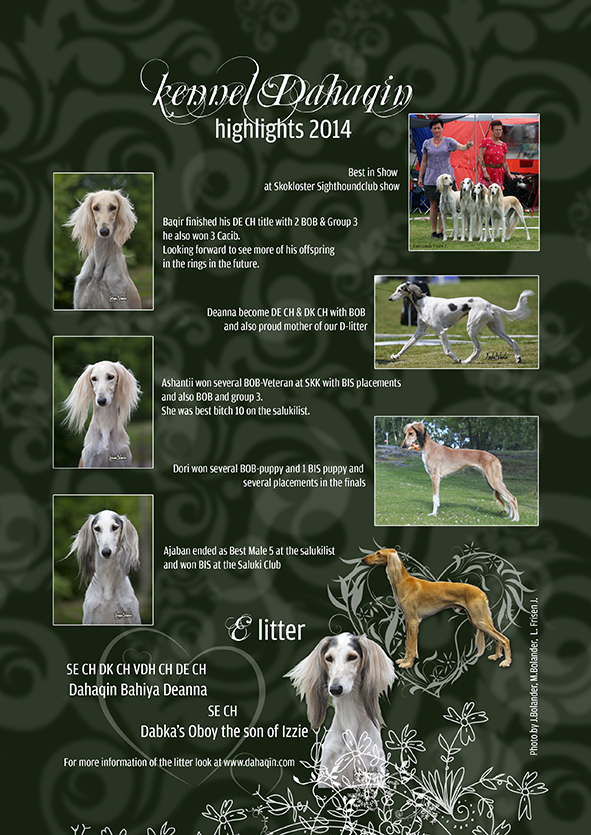 Swedish Saluki Club Spring Issue 2015