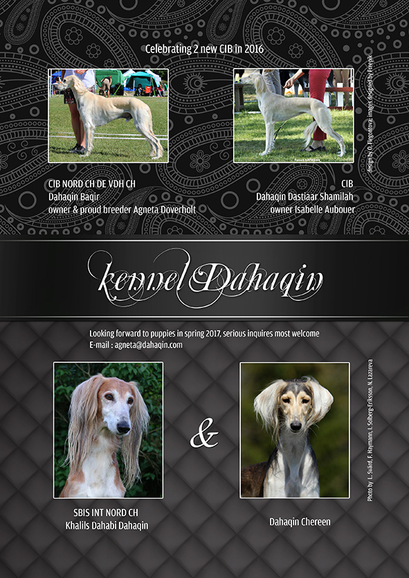 Swedish Saluki Club Christmas Issue 2016/4